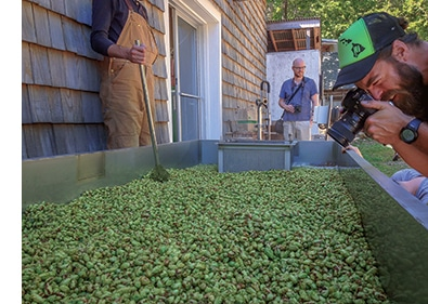 Using hops in your home brew - Alna Hopyard