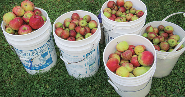 Applejack: How the old-timers made booze in Maine